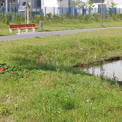 Projekte gerken gartenbau - Gartenbau ulm umgebung ...